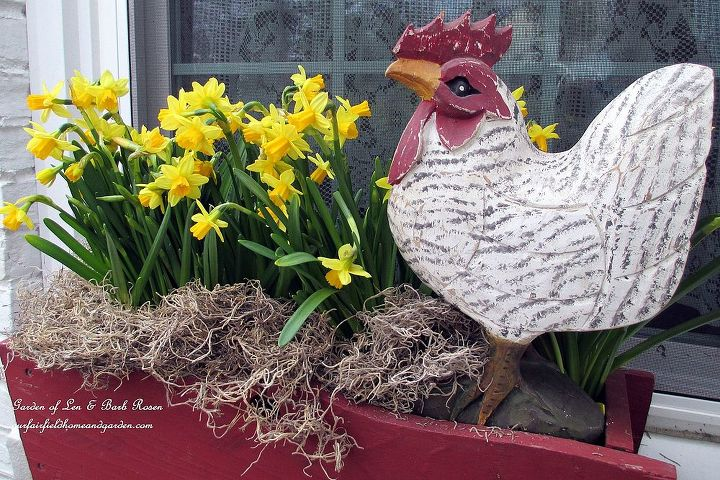 Kitchen deck window box with narcissus & a carved rooster