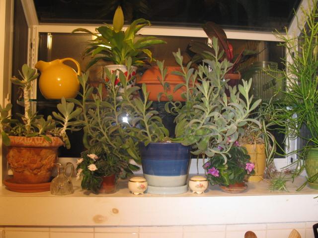 garden window in to tropics, gardening, windows