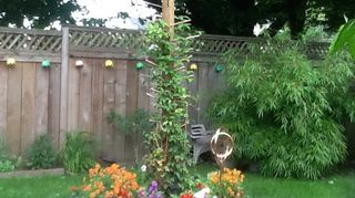 i m calling it my clematis bird condo totem pole, flowers, gardening
