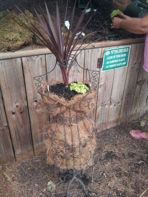 lined the inside with coconut fiber to hold the dirt. the cordyline plant was added to the head area