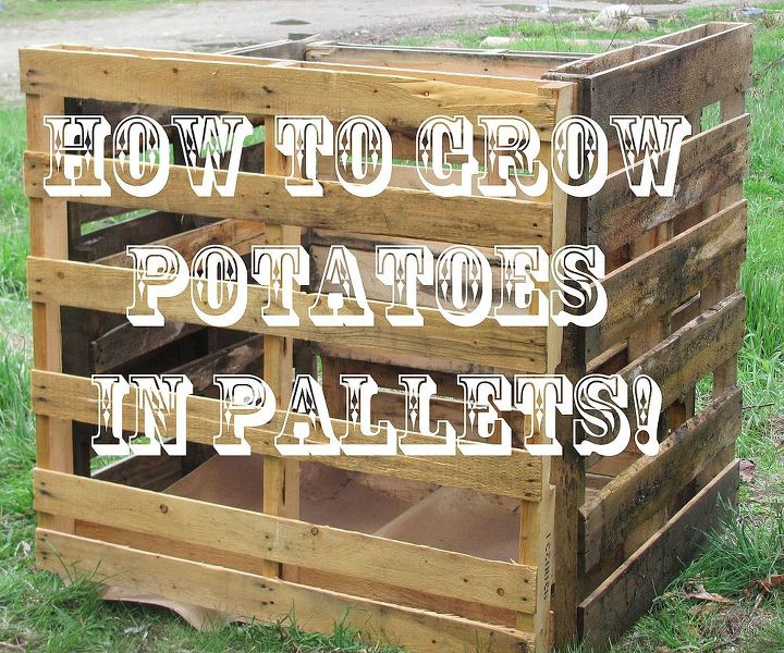how to grow potatoes in a pallet container, container gardening, gardening, pallet