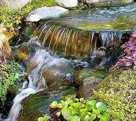 Got stream or pond algae?
