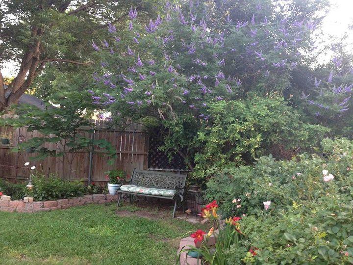 june flowers, flowers, gardening