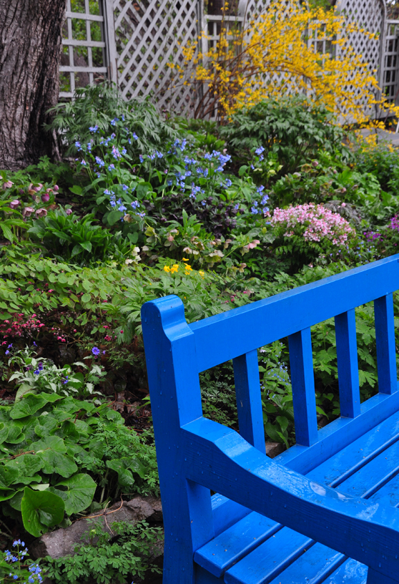 """The bright blue bench in the """"Rock and Water Garden""""."""
