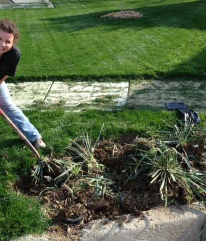 Digging up the Yucca