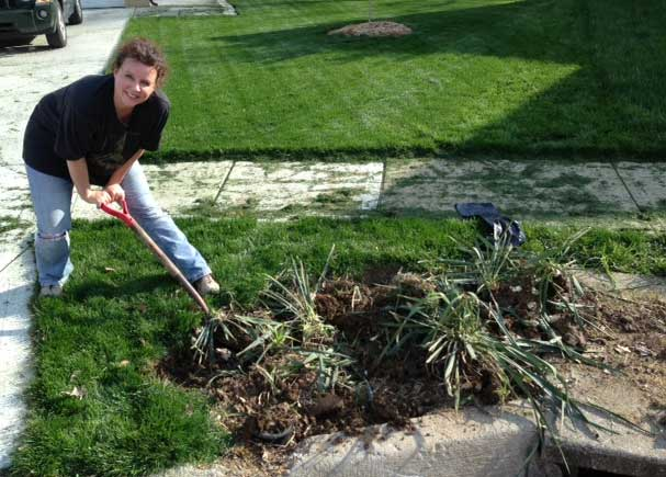 get the yucca out of my yard, gardening, landscape, Digging up the Yucca
