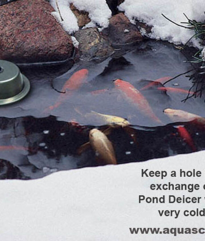 In very cold climates, you may need to use a Pond Deicer to keep a hole in the ice for exchange of gasses.