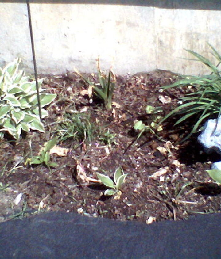 Hyacynths, Tulips Daphies for spring, Lilly and hostas egde the garage. A very sunny spot.