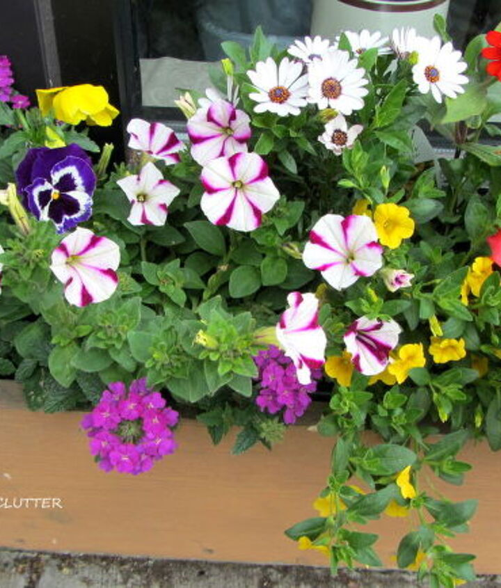 Begonia, million bells, petunia, pansy, and daisies.