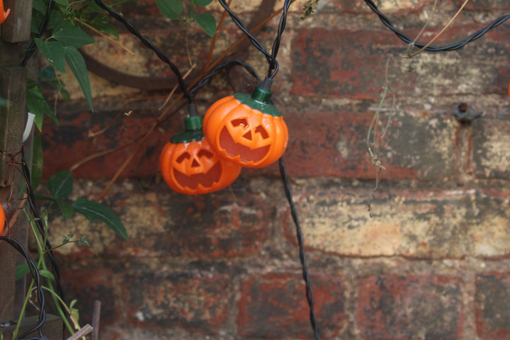 Pumpkin Lights Share Trivets With Autumn Clematis View 1. INFO on trailing habits of Autumn Clematis @ https://vimeo.com/37027072 AND @ http://bit.ly/19nccfc
