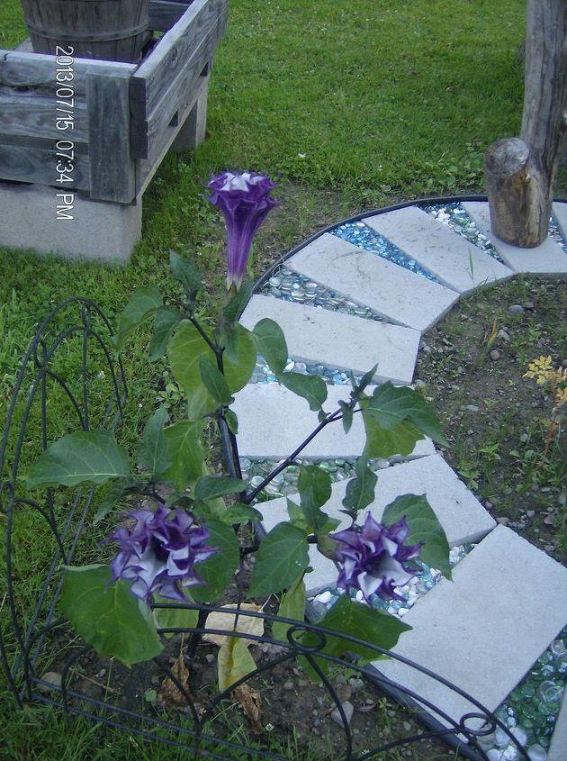Double purple moon flowers.
