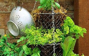 diy herb container garden, container gardening, gardening, The challenge was finding potted herbs at this late summertime date I ended up finding a few at my local home improvement store and a few in the produce section of my grocery store