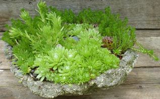 hypertufa and succulents a match made in heaven, flowers, gardening, succulents, Really rustic sag pot with rugged sides for the different species of Sempervivum to cling to