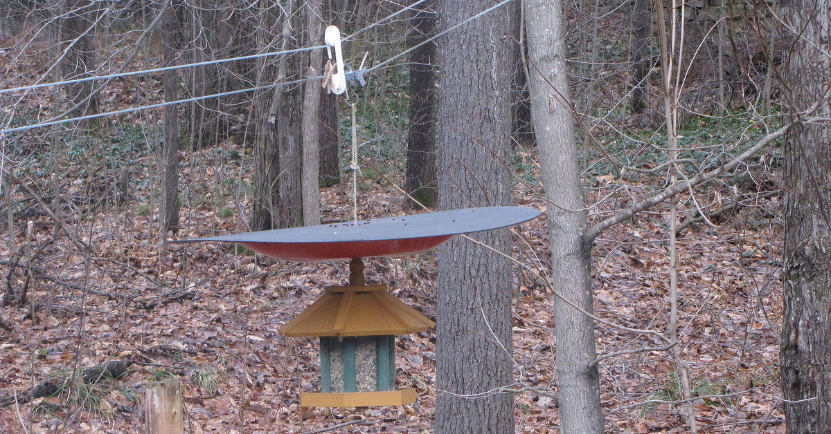 The defeeder make your hanging bird feeder squirrel - How to get exterior paint out of clothes ...