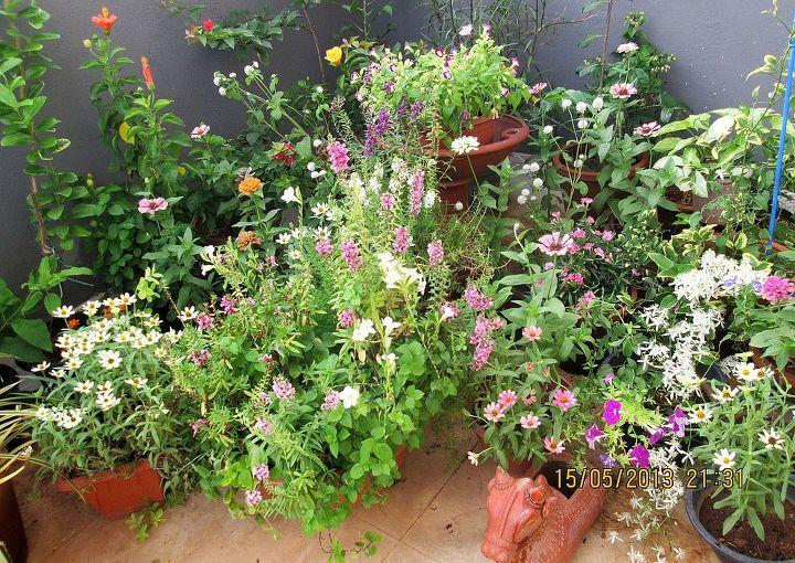 gardening, flowers, gardening
