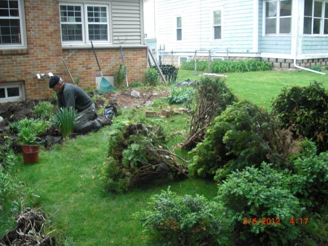 my large landscape project, flowers, gardening, landscape, I had all bushes in front and yard removed removed