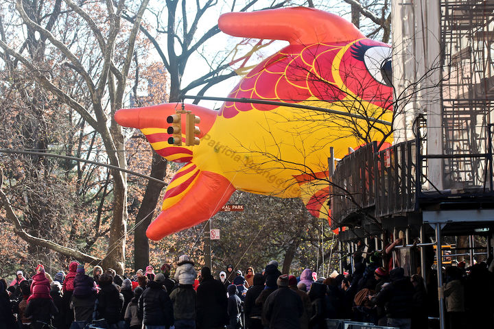 """An unidentified fish """"marches"""" (swims out of water) in Macy's 2013 Thanksgiving Parade. View Six (at CPW). Image featured @  https://www.facebook.com/media/set/?set=a.582320998483944.1073741851.247917655257615&type=1"""