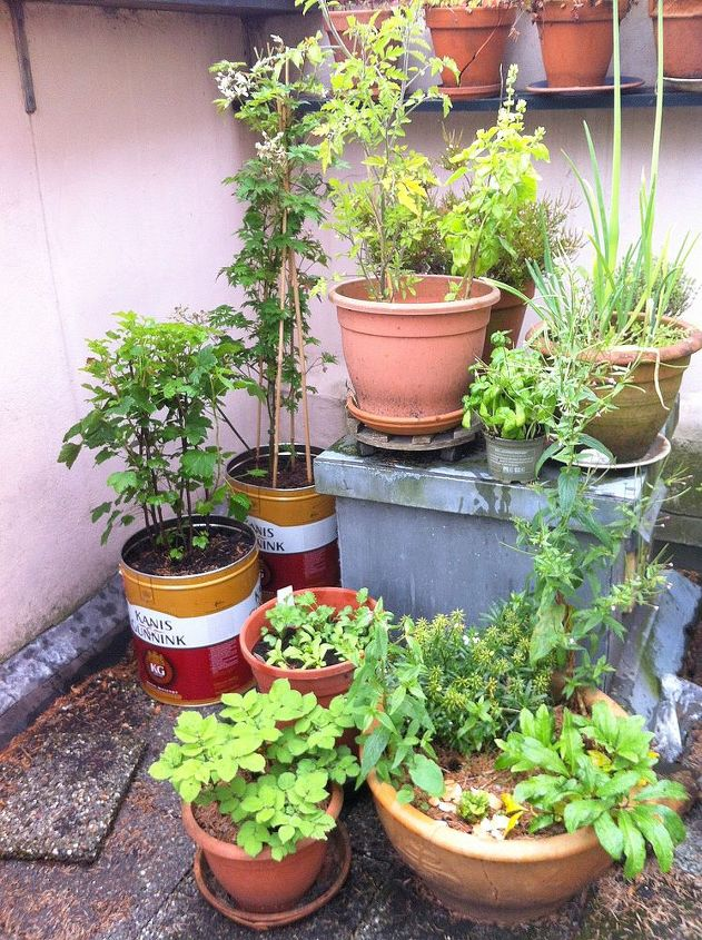 The messy balcony garden is full of found containers growing edibles like berries, tomatoes, herbs, onions and potatoes.