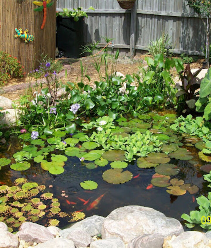 before and after, outdoor living, pets animals, ponds water features