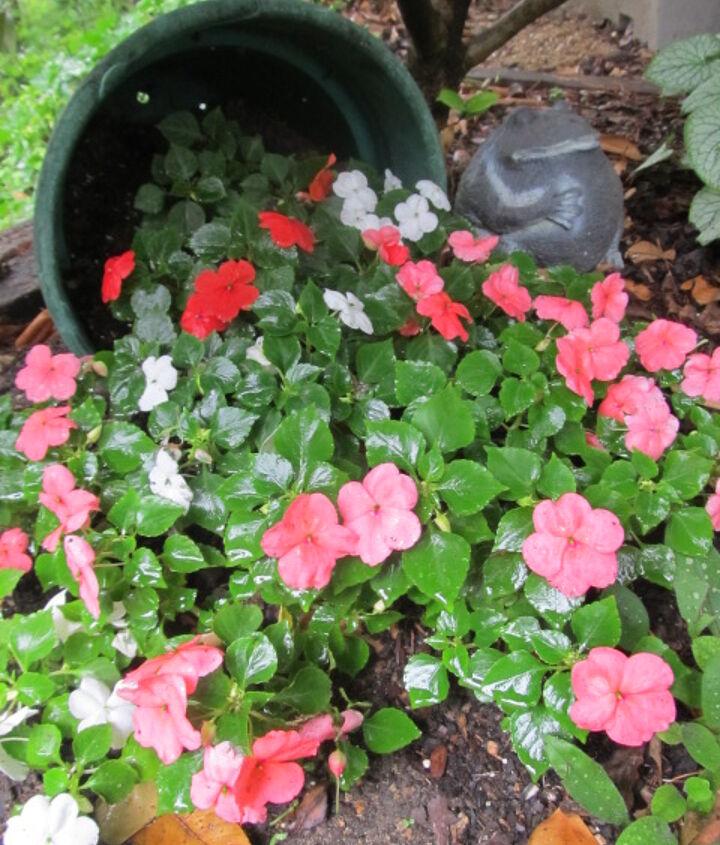 my garden spill pot, gardening
