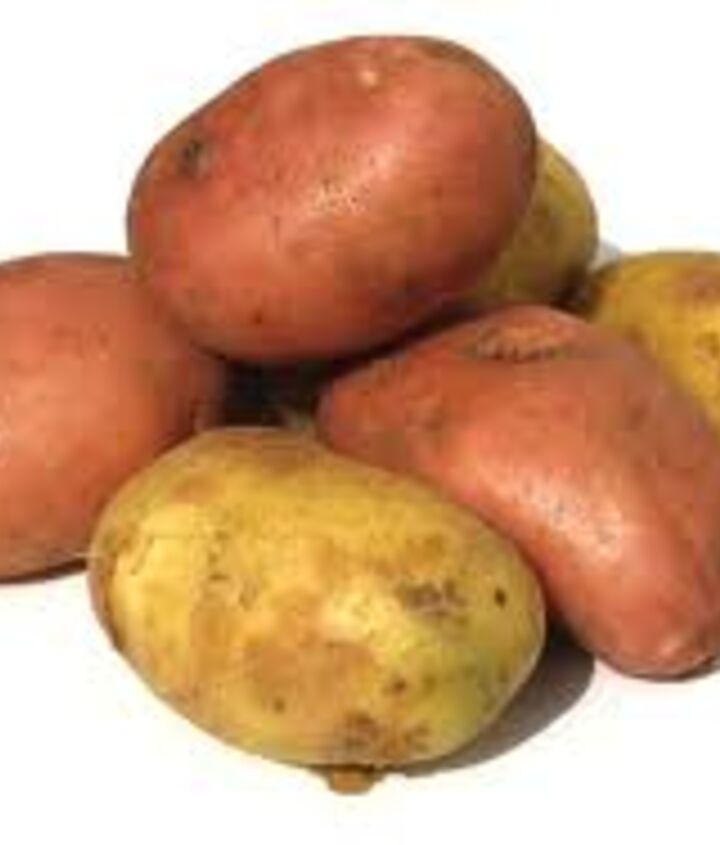 potatoes in the garden, gardening