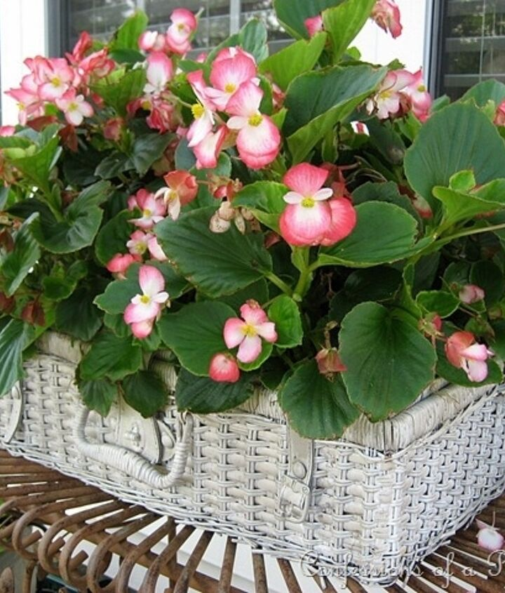 Here it is last July...filled with happy begonias!