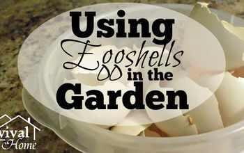 using eggshells in the garden, container gardening, gardening