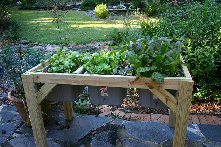 Swiss chard and kale last spring