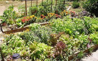 10 reasons to garden organically, gardening, Nothing better than an Organic Garden