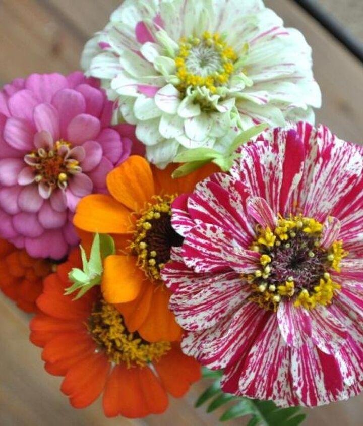 cutting garden recommendations, flowers, gardening
