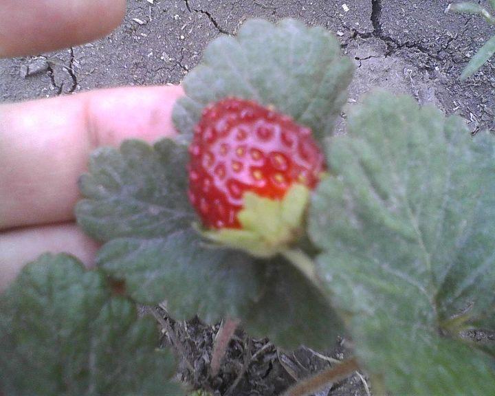 q gardening, gardening, pest control, in My Garden