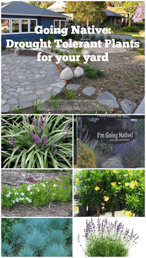 native drought tolerant plants for your yard, gardening, landscape