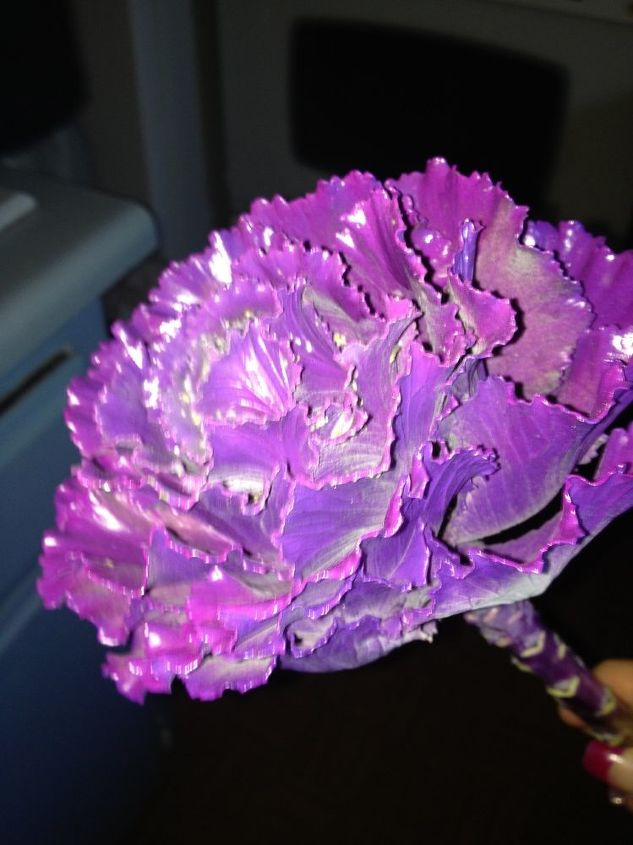 does anyone know what kind of flower this is, flowers, gardening