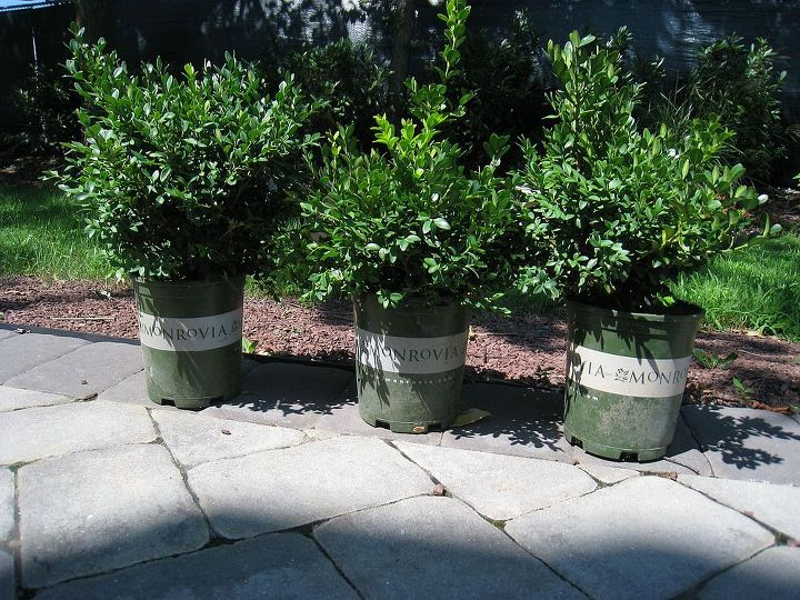 planning a shade garden, flowers, gardening, The boxwood pre planting