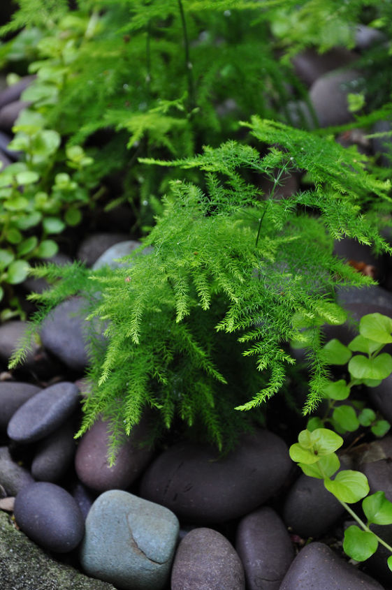 I love the way these dark pebbles set of the fresh green of the ferns. You can find something similar at the dollar store.