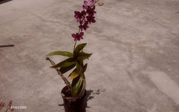 I want to thank all the people that helped me with my Orchids .. I learned so much and followed your advise.