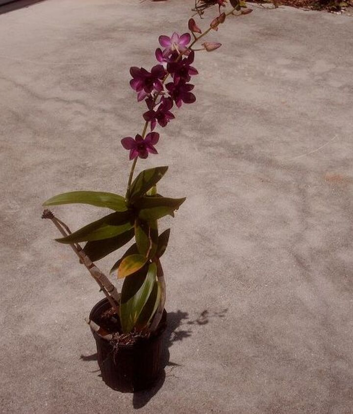 i want to thank all the people that helped me with my orchids i learned so much, flowers, gardening