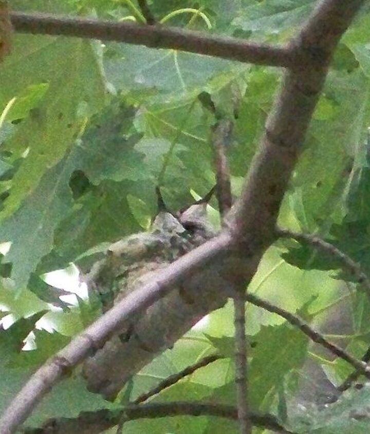 we found a hummingbird nest, gardening
