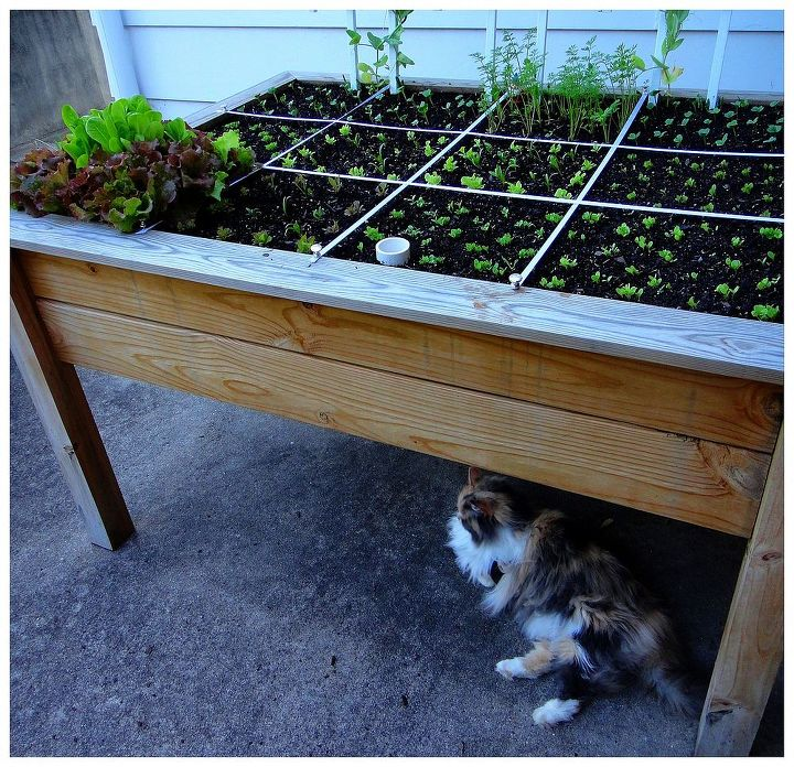 For two growing seasons our neighbors' cats hung around and kept the salad table pest free.