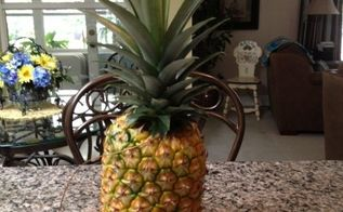 my first grown home pineapple, gardening