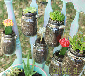 Succulents In Jars