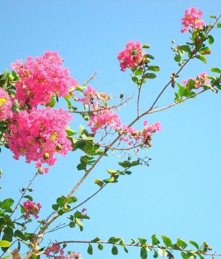 florida skies, gardening
