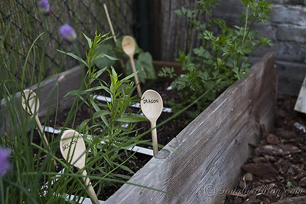 Wooden kitchen spoons mark herbs and seeds.