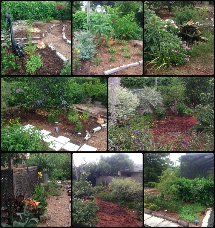 no mow progress, gardening