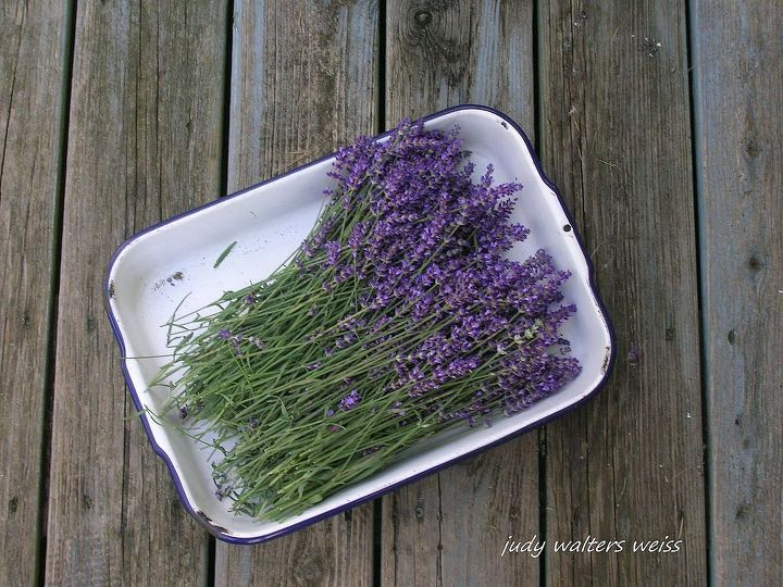 Lavender cut from my garden to hang on drying rack