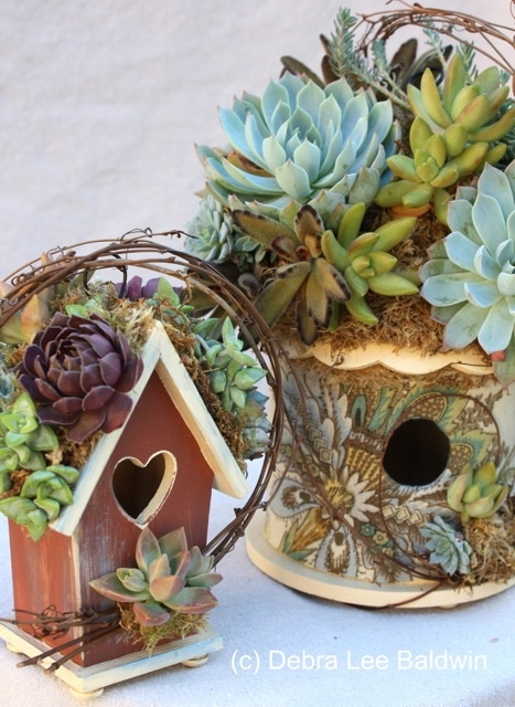 20 succulent planters you ll love, flowers, gardening, succulents