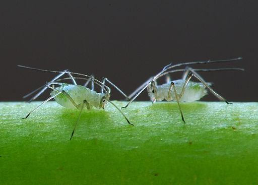 control common garden pests the natural way, gardening, go green, pest control