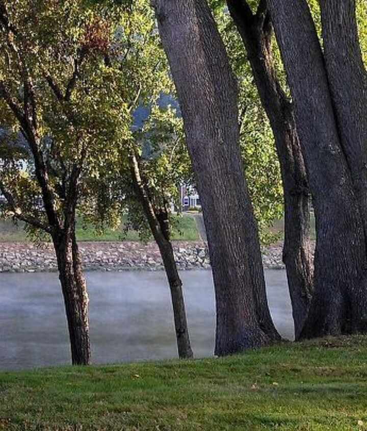 Riverbank tree canopy raised, early morning fog on river (mid-Sept)