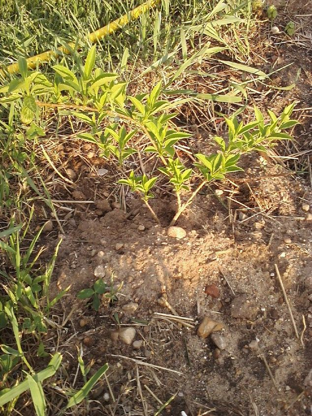 q plant identification