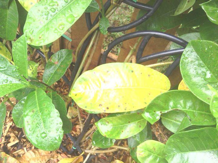 spots, gardening